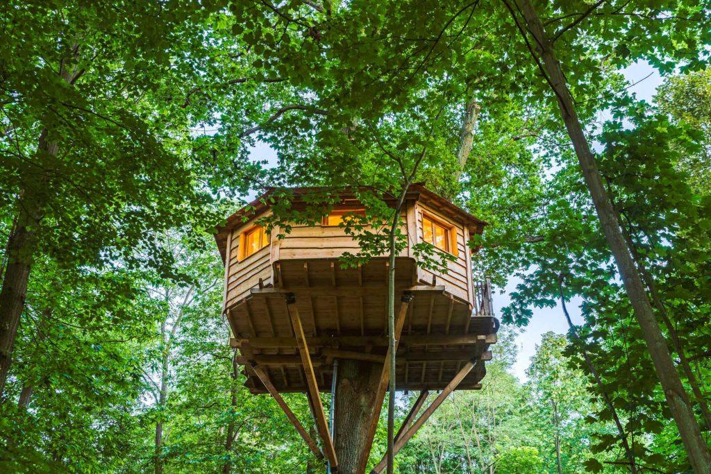 cabane habitable en bois en haut d'un arbre dans une forêt