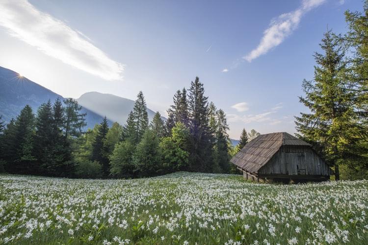 Écolodges en pleine nature